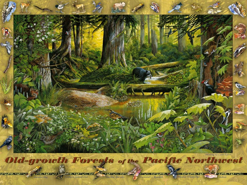 12764 Old-growth Puzzle
