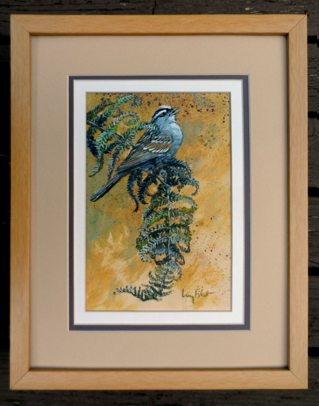 White-crowned-Sparrow-framed