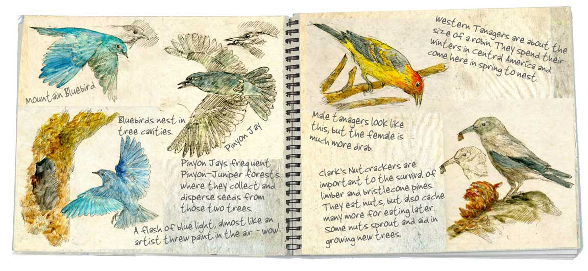 2-Birds-double-page