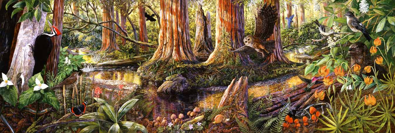 Eifert_Muir_Woods_NM