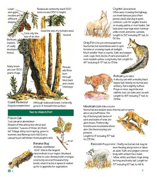 Eifert_Nature_Guide_Redwoods_2-3