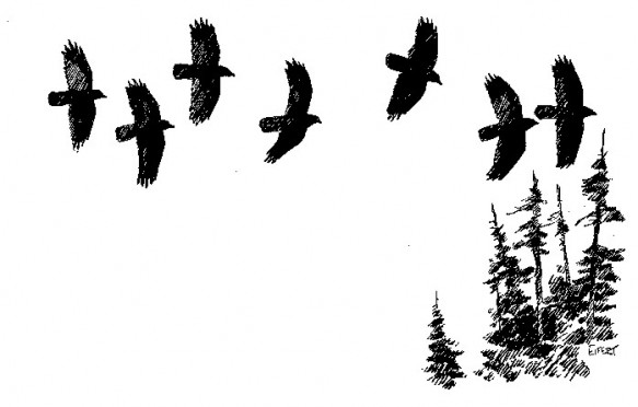 Flock of crows flying