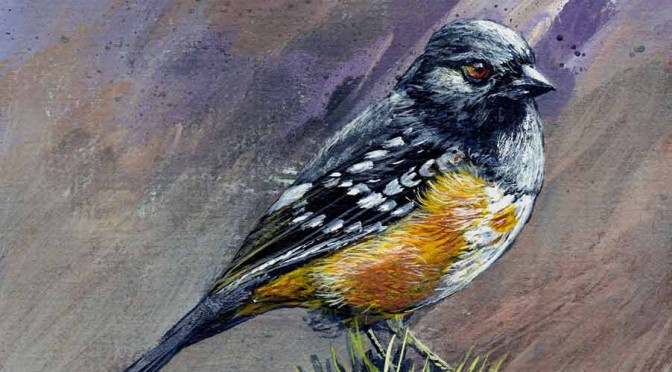Towhee-featured