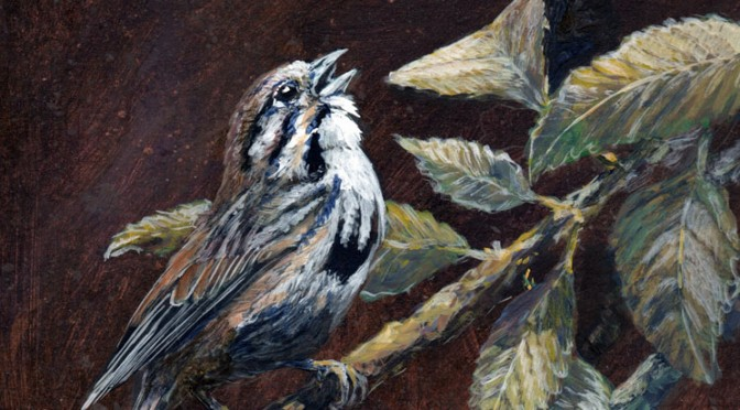 Song-Sparrow-featured
