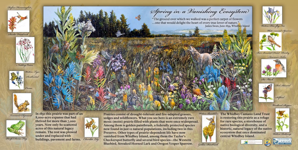 Whidbey-Spring-Prairie