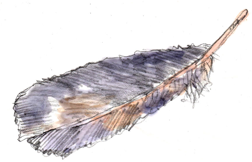 crow-feather