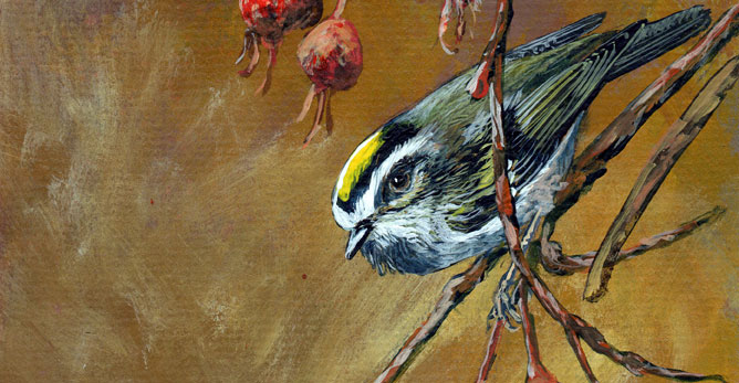 Golden-crowned Kinglet – a new painting