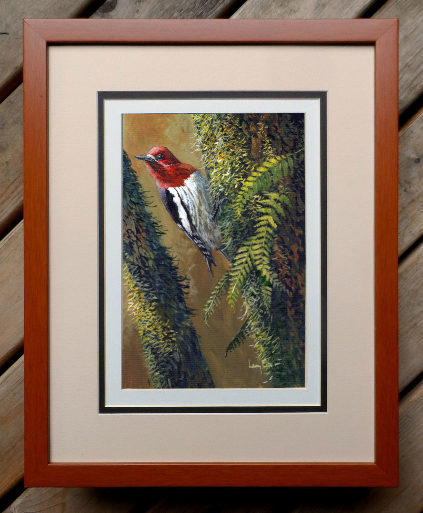 Red-breasted-Sapsucker-framed