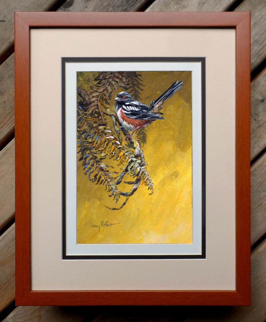 Rufous-sided-Towhee-Ferns-framed