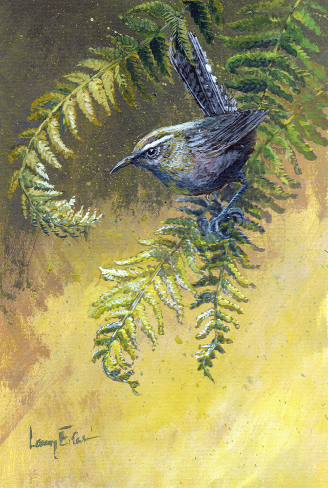 Bewicks-Wren-Yellow-Ferns