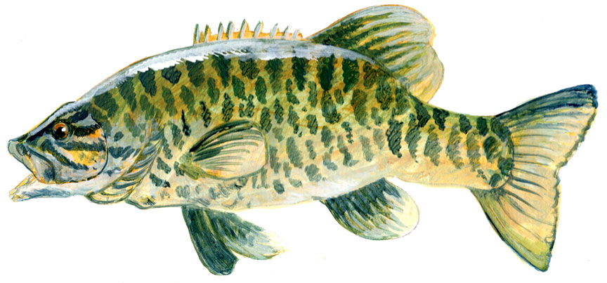 Ludington-Smallmouth-Bass