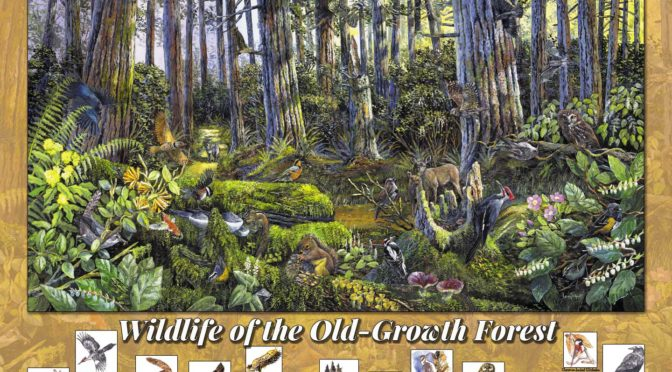 Wildlife of the Old-growth – a new jigsaw puzzle for Christmas