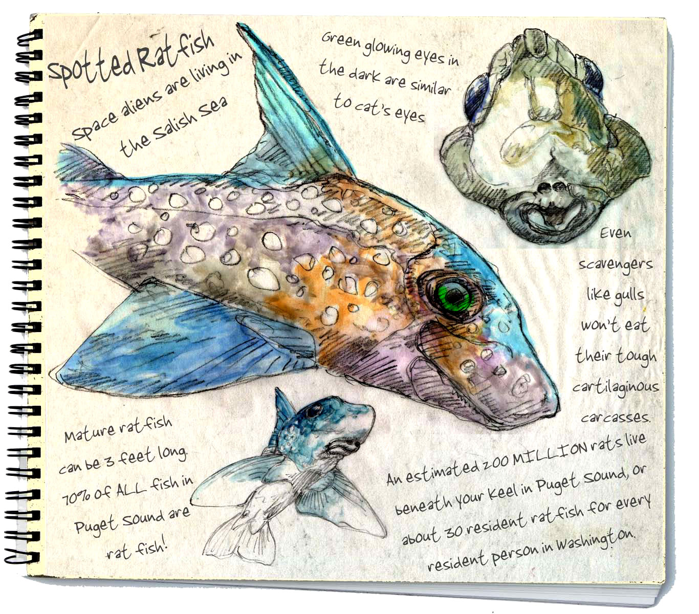 2014 5 Spotted Ratfish Space Aliens The Art Of Larry